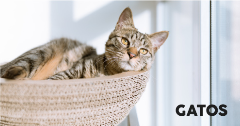 Categoría Productos para Gatos