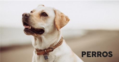 Categoría Productos para Perros
